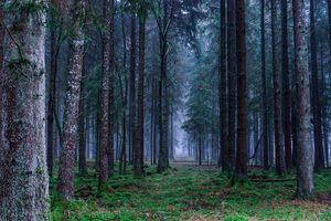 Земли особо охраняемых территорий и объектов