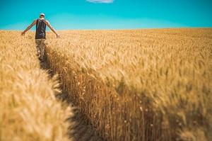 Правила постановки на кадастровый учет земельного участка