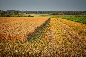 Как отказаться от земельного участка