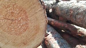 Как получить лес на строительство дома бесплатно